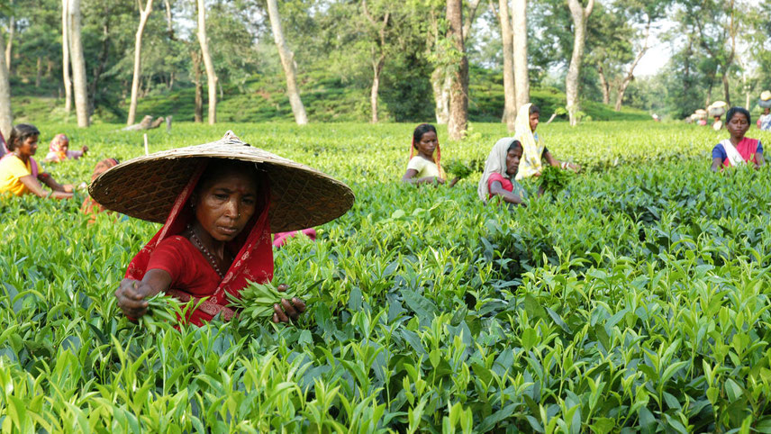 The cost of producing tea has gone up by almost 50 per cent over the past 10 years
